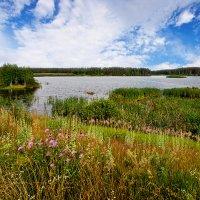 Летом на озере :: Анатолий Тимофеев
