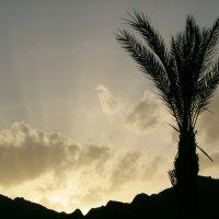 palm in the darkness :: Татьяна Буркина
