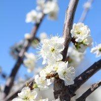 Весна :: Олег Ивасенко