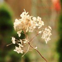 прошлогодние цветы :: boris kantor