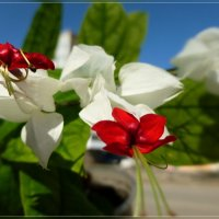 Цветок счастья :: galina tihonova