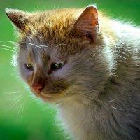 Бедный кот. :: Сергей Сашов