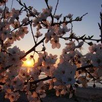 Весенний закат :: Валерия заноска