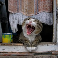 Люблю я поработать, особенно поспать! :: Алёна Михеева