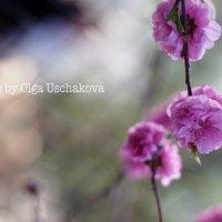 цветочек) :: Ольга Ушакова