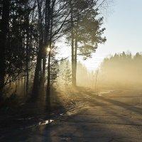 Утро на опушке леса. :: Валерий Молоток