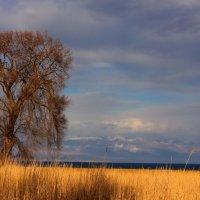 Одинокое дерево :: Татьяна Д