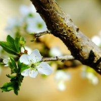 Весна,весна пришла... :: Дмитрий Скубаков