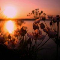 усталое солнце :: Тася Тыжфотографиня