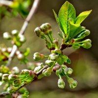 Весна пришла в город :: Игорь Мукалов