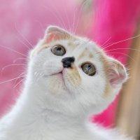 Мир в глазах котенка :: Любовь Овсянкина