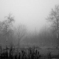 Туманный пейзаж :) :: Елена Перевозникова