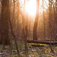 Весенний лес :: Светлана Кулагина