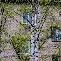 Городская весна. :: Павел Данилевский