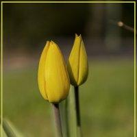Жёлтые :: Андрей Бойко