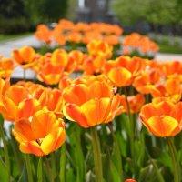 Весна в Донецке :: Ольга Рыбакова