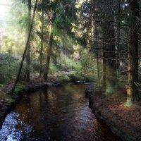 Весенний ручей :: Екатерина Тумовская