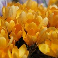 Долгожданная весна :: Александр Сивкин