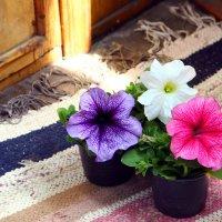 весна-а-а-а =) :: Sunny Anny