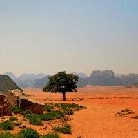 Пустыня :: Валентина Потулова