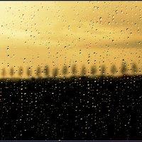 Капли дождя :: Алексей Соминский