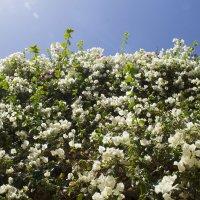 стена цветов :: Елена Герасимова