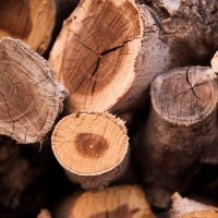#firewood :: Anna Sergeeva