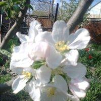 Зацвели сады :: Натали Жоля