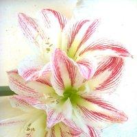 Три лилии :: Натали Жоля