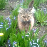 Запахло весной :: Натали Жоля