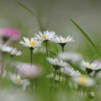 Весна в Крыму :: надежда корсукова