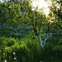 Зелёный сад. :: Юрий Кущ