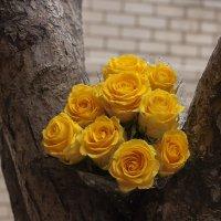 Розы :: Александр Манько