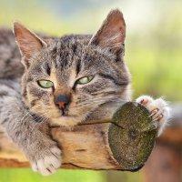 Кіт :: Роман Плешівський