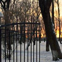 Зимний парк :: Алёна Михеева