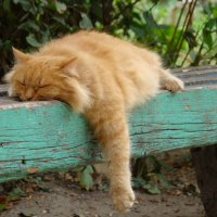 Relax :: Mikhail Prokaznikov