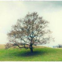 Дерево :: Антон Смульский