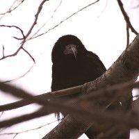 Птица :: Натали V