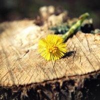 Солнечный цветочек :: Яна Васляева
