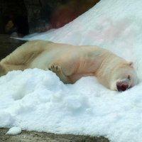 Зоопарк. Сон в зной. :: Михаил Малец