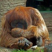 Зоопарк. Как вы на нас похожи! :: Михаил Малец