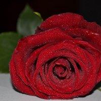 Царица цветов :: Елена Валерьевна