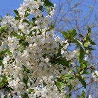 Весна :: Елена Багрий