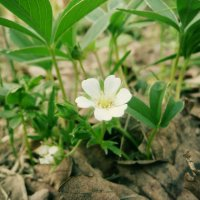 Весна в лесу.... :: Саша Матвіюк