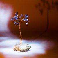 Призрак дерева :: Михаил Сандарьян