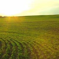 Весеннее поле :: Иван Носов