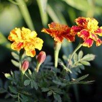 Цветы :: Сергей Гурьев