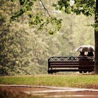 А в душе солнечно :: Дмитрий Тимошенко