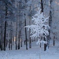 Frozen :: Mikhail Prokaznikov