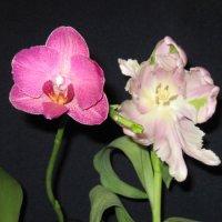 Два цветка :: Маера Урусова